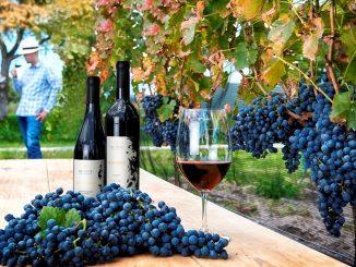 8 fiestas del vino que no se pueden perder
