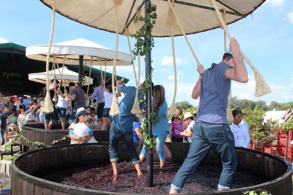 La fiesta inicia el 8 de julio con el pisado de la uva