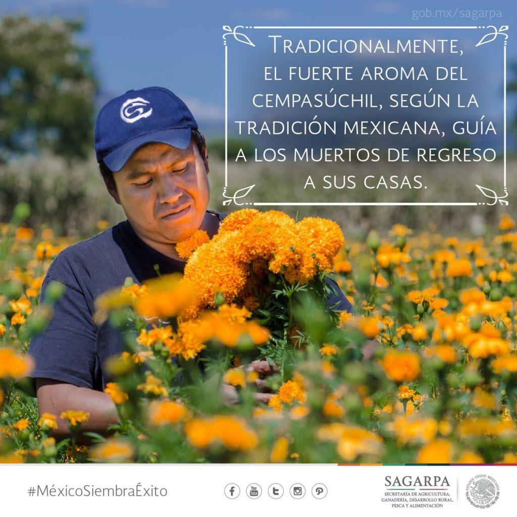 Flor de cempasúchil, esencia que florece este Día de Muertos | Like ...